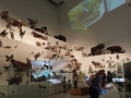 Evolution Exhibit