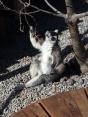 Lemur Exhibit