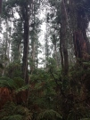 More tall trees