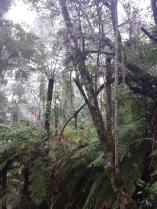 Forest/Bush