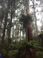 More tall trees (they were crazy tall)