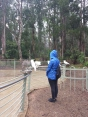 Steph making more Cockatoo friends