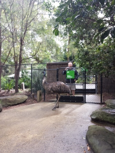 Dad leaving me to the Emu